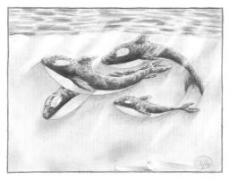 Orcas - Pencil by Lei22