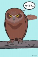 angry owl by Petrichor-A