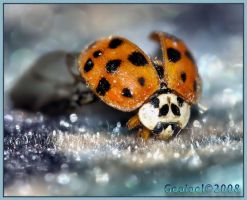 Lady bug 2 by Gooiool