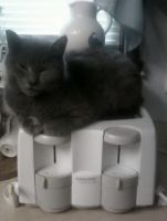 Toaster Kitty by Photos-By-Michelle