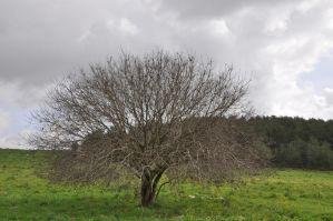 Tree with Clouds by lironk