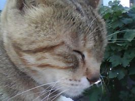 my cat by manar1