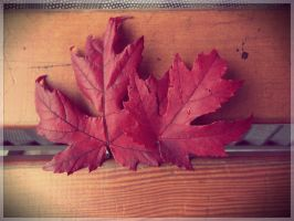 Maple 1 by Nuce-Photography