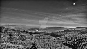 Oregon Forest Hills by Walden-Photography