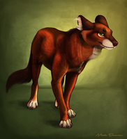 This Charming Dhole by Sokalo
