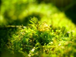 Macro World, Greenery by MikeMS