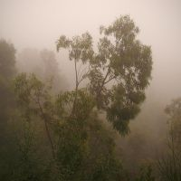 Trees in the mist by yuushi01
