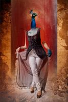 peacock by fudaryli