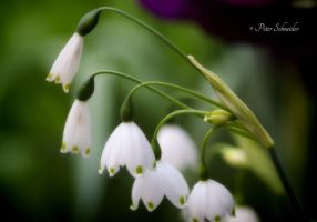 Bells. by Phototubby