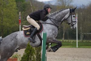 Grey Horse - Show Jumping Stock 8.21 by MagicLecktra