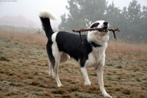 This stick is mine! by Lastofthewilds666