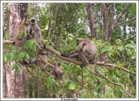 Bhandavgarh - Langur's 02 by Knightmare-at-9