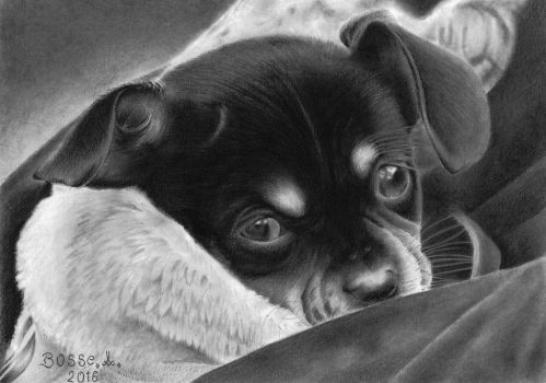 A puppy named Gizmo by Torsk1