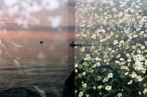 sea,boat,daisies by deryayilal