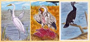 ACEOs: Birds of the Planet by Tavaris