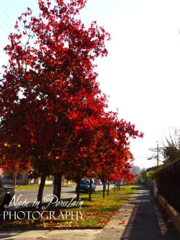 Autumn is coming IV by NatuInPorcelain