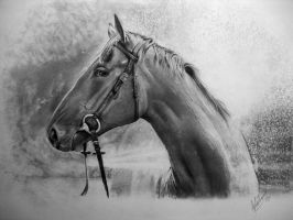 PDSA Competition Winner 2011 by Dhekalia