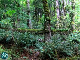 portland forest two by DCRIII