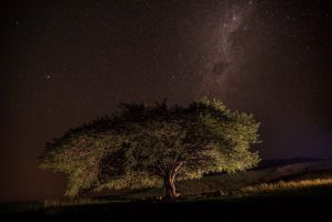 The Tree and some stars by carlosthe
