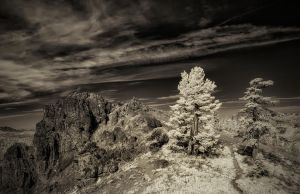 Two Trees and an Outcrop (B W Version) by swiftmoonphoto