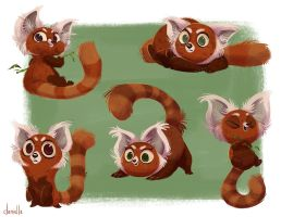 Cute Red Pandas by doingwell