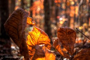 On the Forest Floor by jasonswint