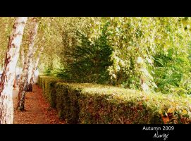 Autumn path by niwaj