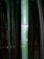 Bamboo 2 by ManixTT-stock