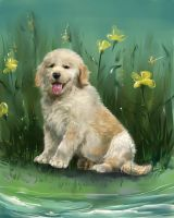 Golden retriever pup by IPPO-Lita