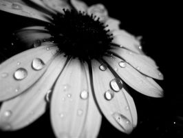 Water Droplets by cheiso