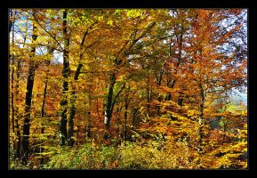 end of autumn is near no.2 by Hartmut-Lerch
