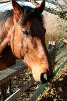 Horse stock  number 4 by 1w1w