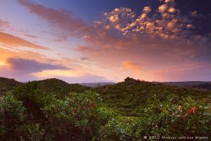 Sunset Vegetation by Photomerwe