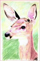 Ted's Doe by MrAbby