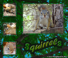 Squirrel Pics by SurnThing