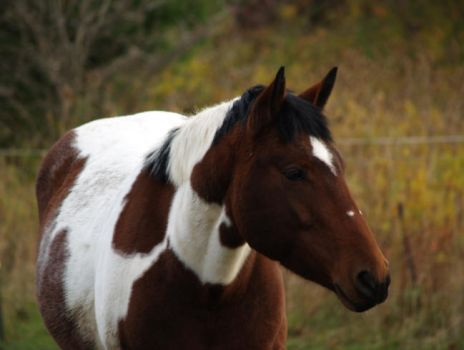 horse - stock21 by oldpost-stock