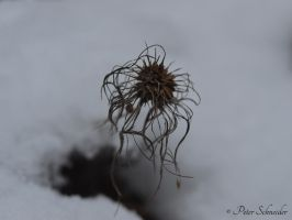 Winter melancholy. by Phototubby