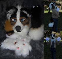 Ollie Collie for Sale! by Sharpe19