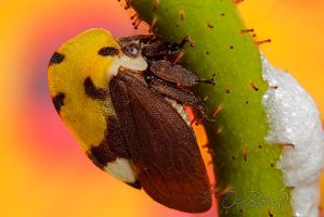 Treehopper by otas32