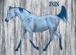 Isis by DA-Horse-Herd