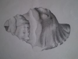 Shell in Shading by IamTheWay