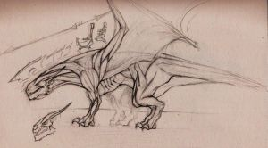 Draconic Anatomy by The-Captain-Jack