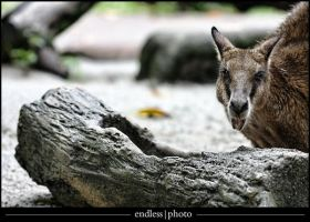 zoo 8 by theendlessphoto