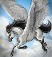 Pegasus by wrobles4