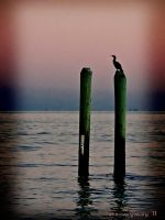 Lonely Loon by stormymay888