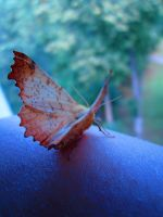 butterfly on my hand by Dietrich444