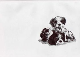 wittle puppys by RACHLOVEDRAW