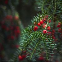 red trail II by JoannaRzeznikowska
