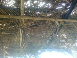 Palm tree roof by hellkite527