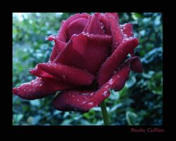 After the rain by PaulaMCollins